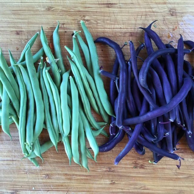 Beans from the teepee I love growing unique colored vegetables!hellip