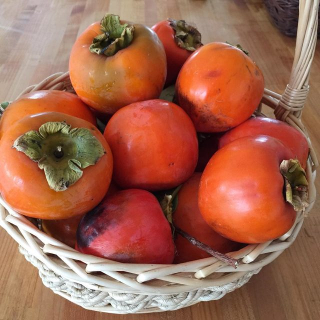 Persimmons make me think of fall There are houses allhellip