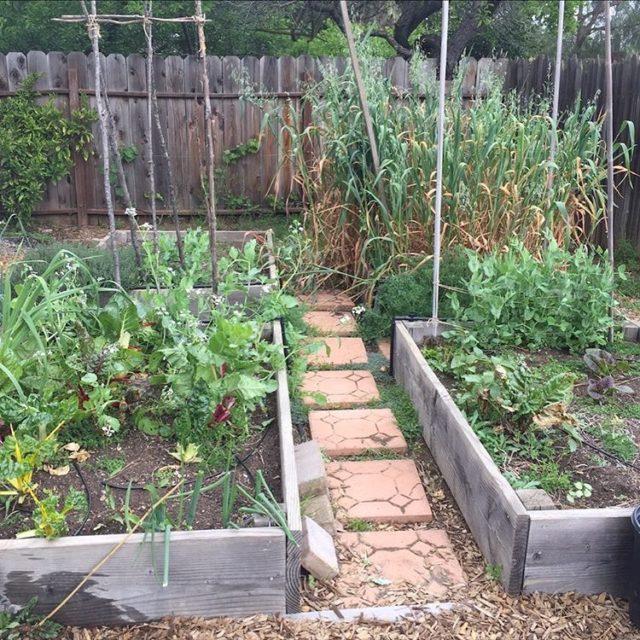 Garden in transition getting ready for our summer garden! Imhellip