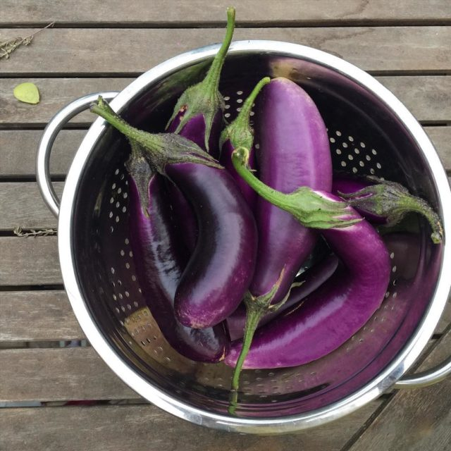 We harvested our last round of eggplant yesterday! We arehellip