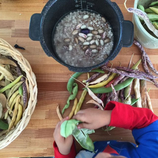 Caleb and I harvested the rest of our beans yesterdayhellip