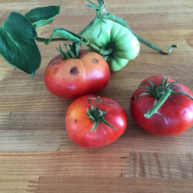 Trying to hold onto summer with the last tomatoes cominghellip